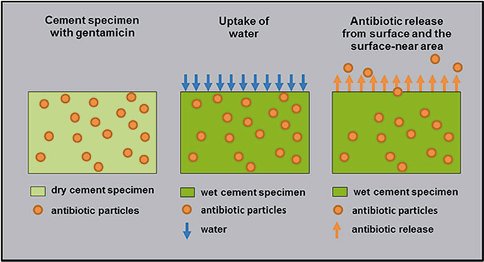 Antibiotics are released from the bone cement in exchange for infiltrating water